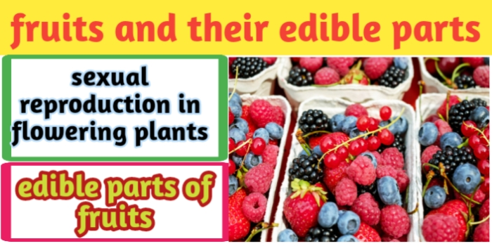 Types of fruits and their edible parts- Quick revision for CBSE-JAC exams