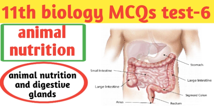 Class 11th biology MCQs test-6 for Neet-CBSE-JAC exams