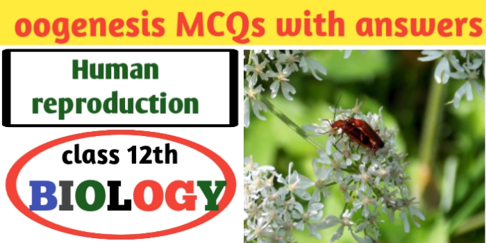 ■ oogenesis MCQs with answers for neet-CBSE-JAC exams