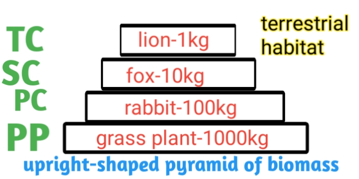 Ecological pyramid-definition types and example