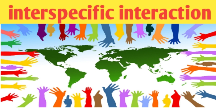 Ecology/ interspecific interaction and its types