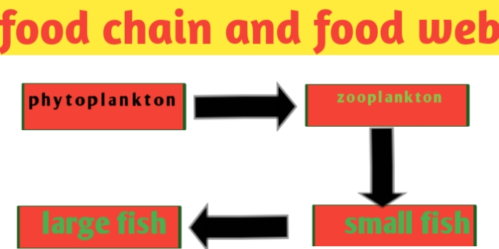 Food chain and Food Web ,definition, diagram and examples