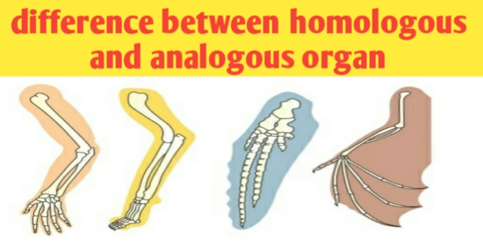 What are the difference between homologous and analogous organ