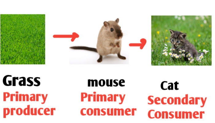 Food chain diagram for class 2