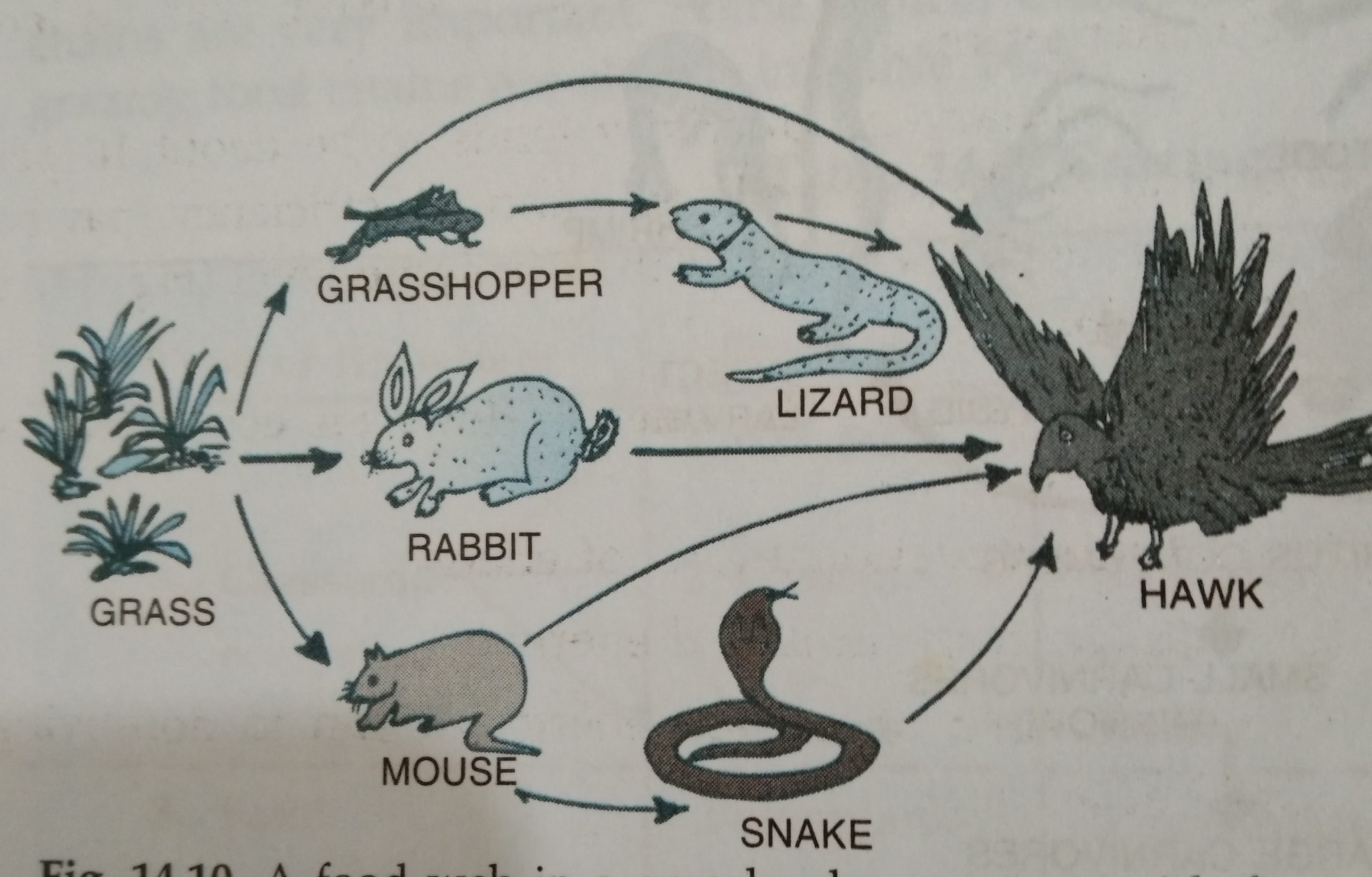 Terrestrial Food Web diagram