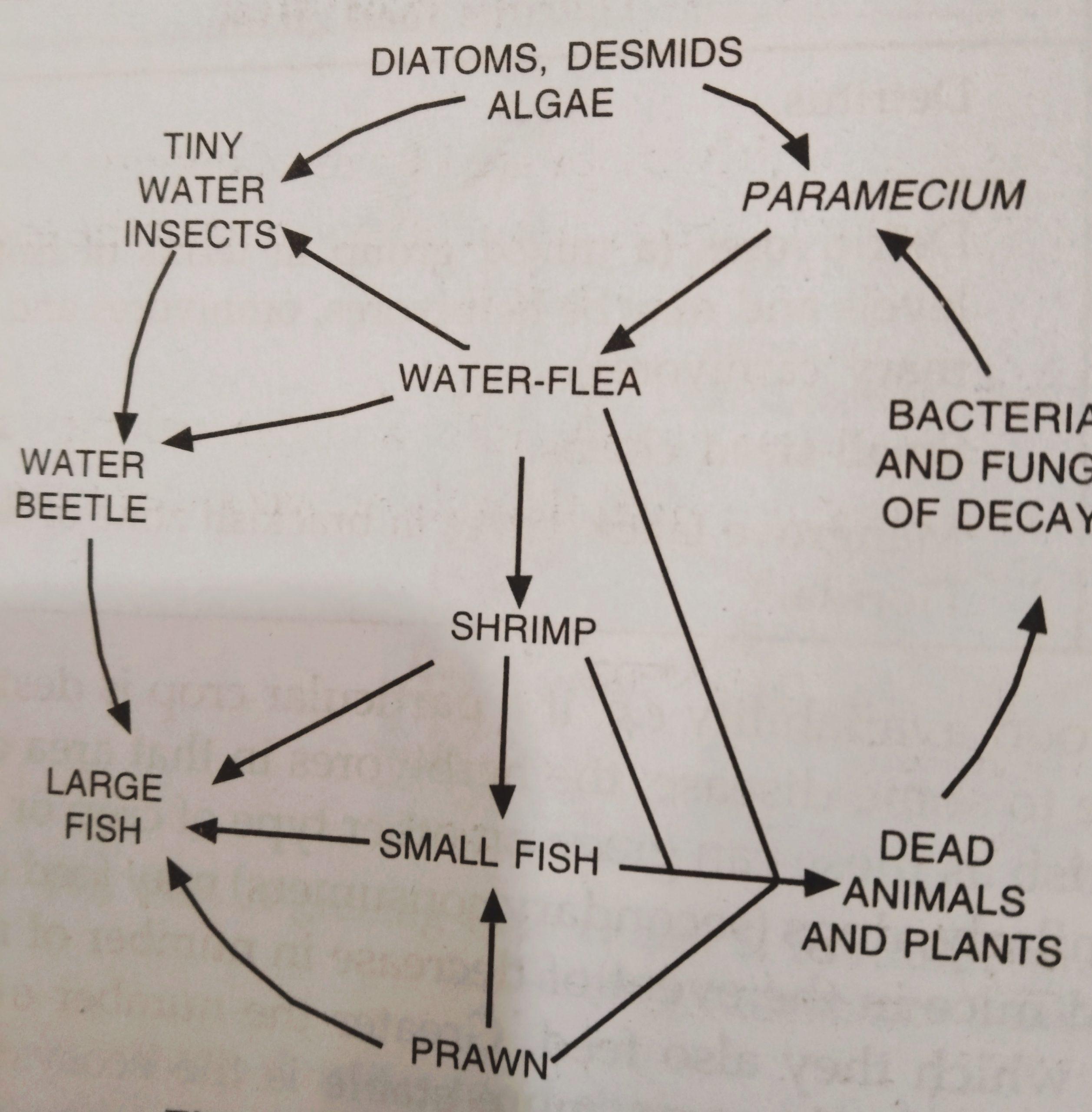 Food web diagram in a pond