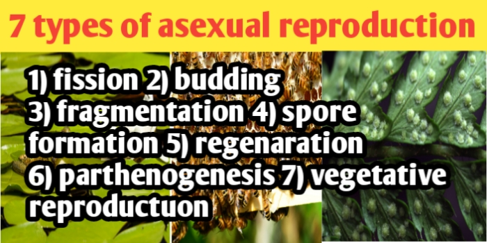 Seven types of asexual reproduction
