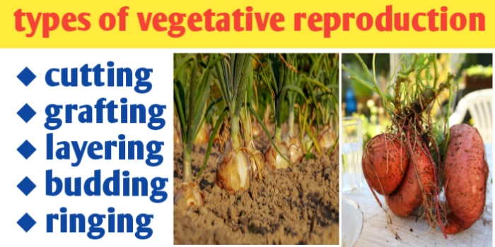 Types of vegetative propagation and its definition