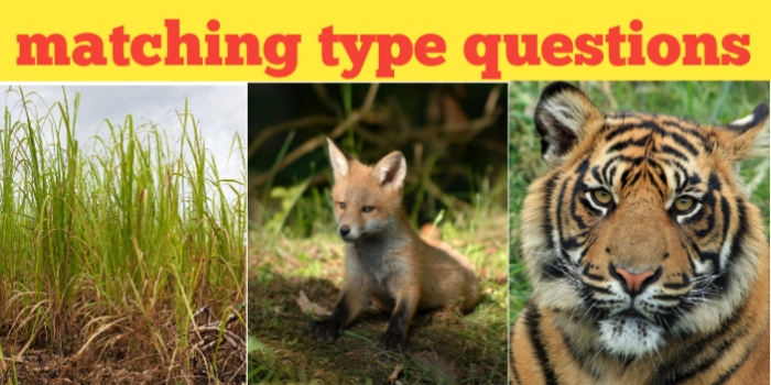 Important matching type questions with examples from ecology