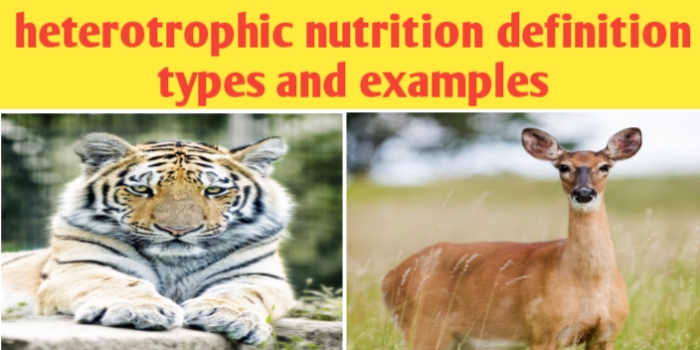 Heterotrophic nutrition definition types and examples
