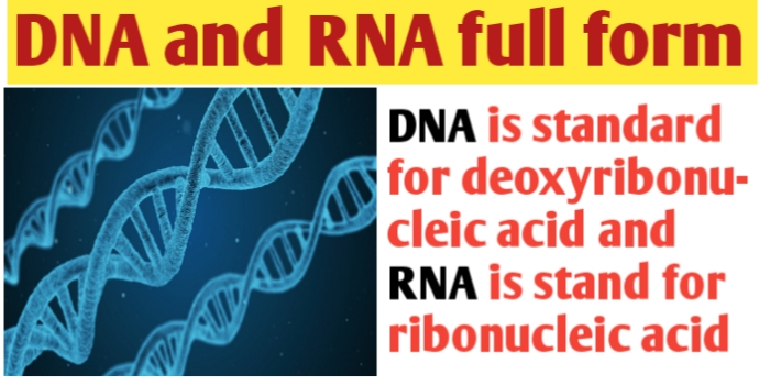 What is the full form of DNA and RNA ?