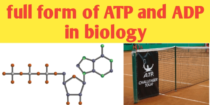Full form of ATP and ADP in biology