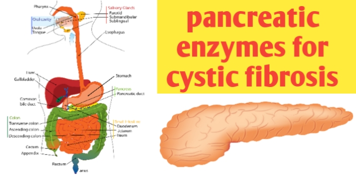 Pancreatic enzymes for cystic fibrosis and treatment