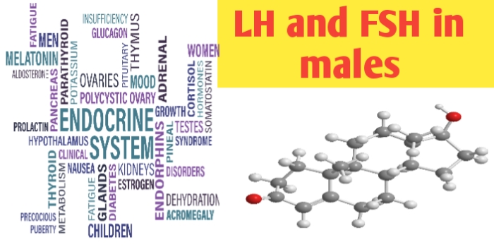 LH and fsh in males: LH and FSH hormone