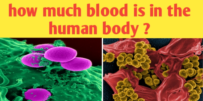 How much blood is in the human body ?