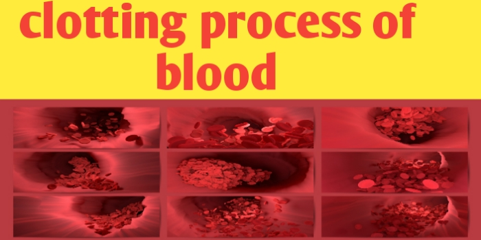 Describe the clotting process of blood and its mechanism