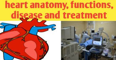 Heart: anatomy, physiology, location, disease and treatment