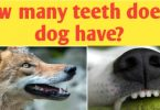 How many teeth does a dog have ?