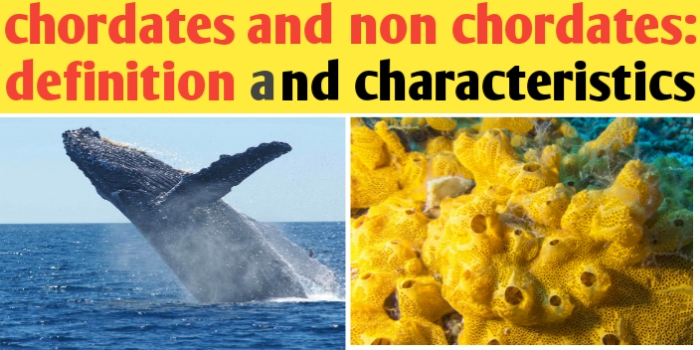 Chordate and non Chordate Difference | characteristics and facts