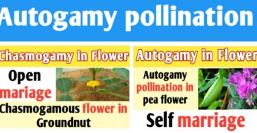 Autogamy pollination definition and example with diagram
