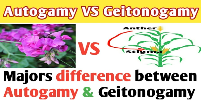 Autogamy and geitonogamy difference | Autogamy | Geitonogamy