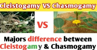 What is difference between Cleistogamy and chasmogamy