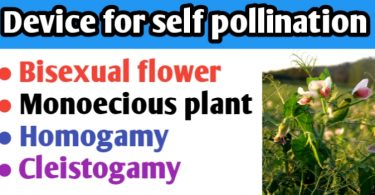 Device favouring self pollination in angiosperm is