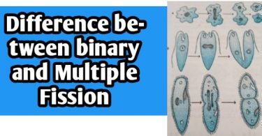 Differences between binary and Multiple Fission