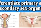 Differentiate primary and secondary sex organs