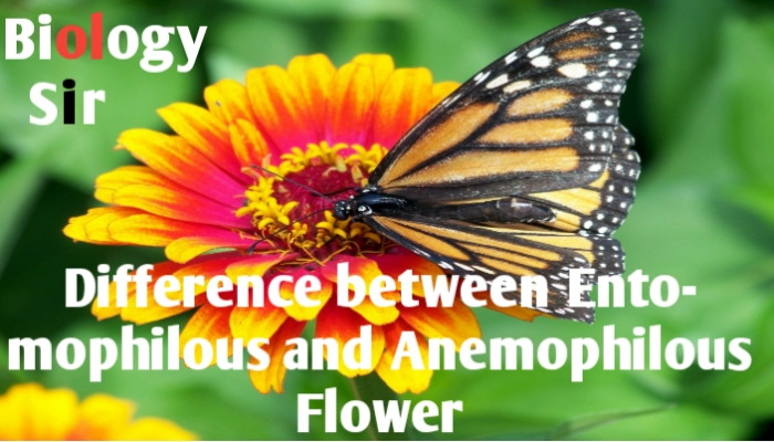 Difference between Anemophilous flowers and Entomophilous flower