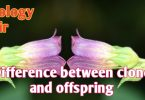 Differences between clone and offspring |Clone |Offspring