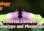 What is differences between genotype and phenotype