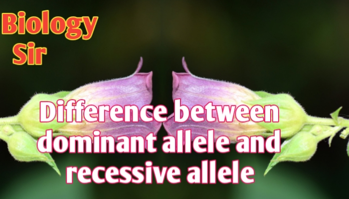 Difference between dominant allele and recessive allele