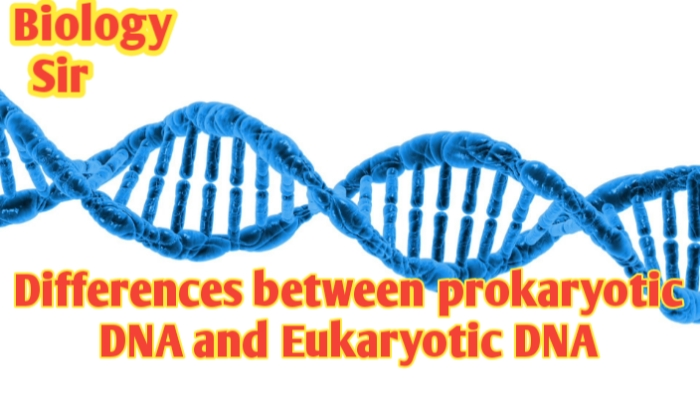 Differences between prokaryotic DNA and Eukaryotic DNA