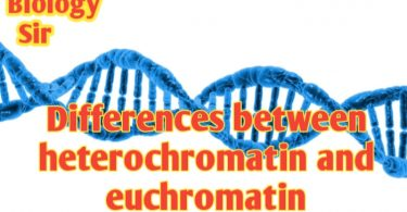 Differences between heterochromatin and euchromatin