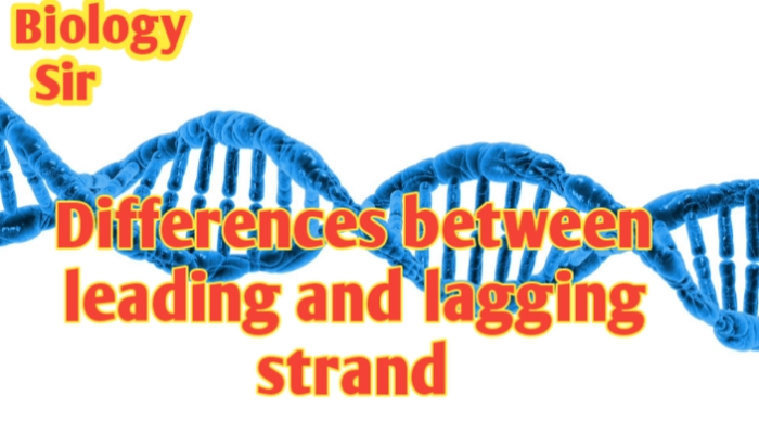 Differences between Leading and Lagging strand