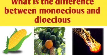 What is the difference between monoecious and dioecious