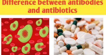 Antibodies and antibiotic differences, definition and functions