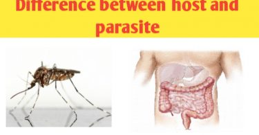 What is the difference between host and parasite